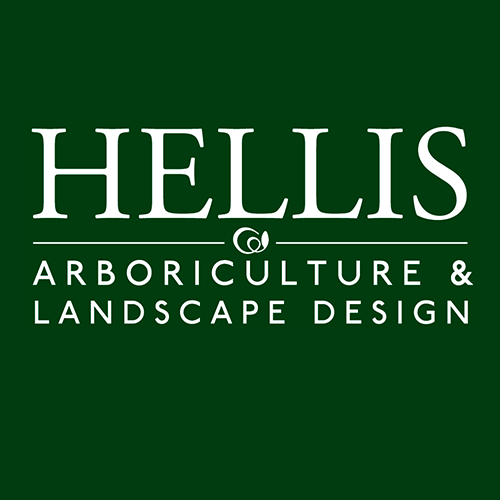 hellis_500px
